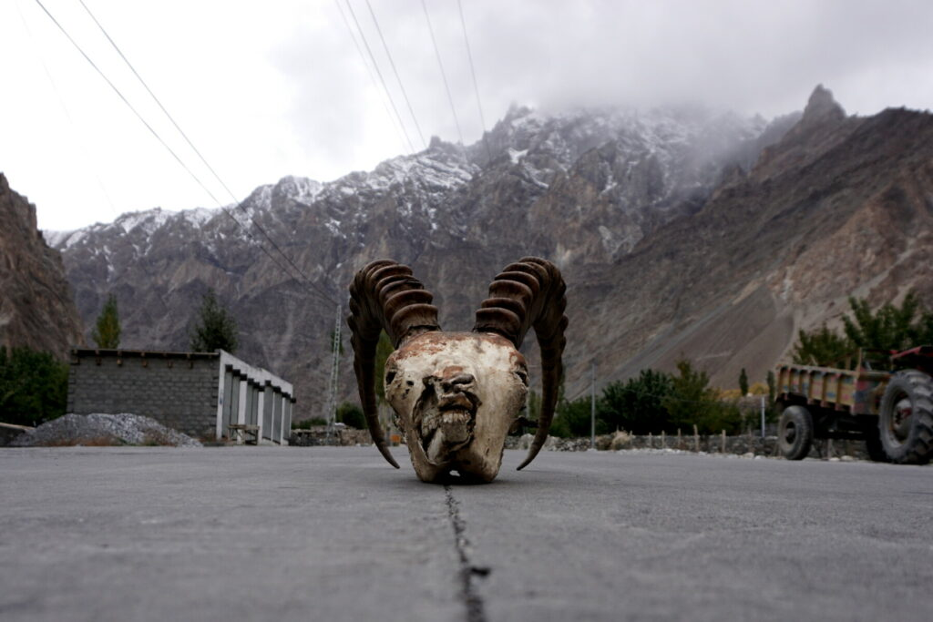 Ibex skull on the Karakoram Highway in Pakistan